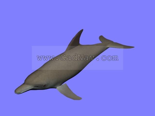 Dolphin 3d rendering