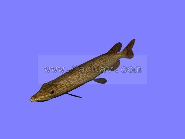Brown pike conger eel 3d rendering