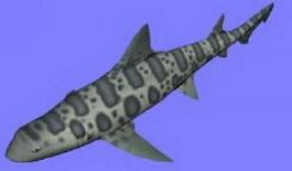 Leopard shark 3d preview
