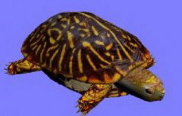 TURTLE 3d model preview