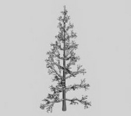 White cedar 3d model preview