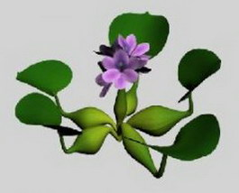 Water hyacinth 3d model preview