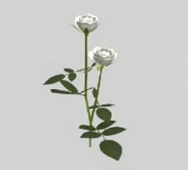 Rose White 3d model preview