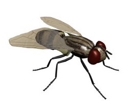 House fly 3d model preview