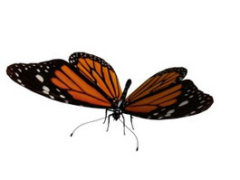 Butterfly 3d model preview