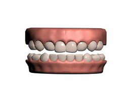 Human teeth 3d preview