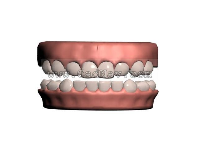 Human teeth 3d rendering
