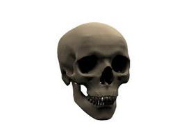 Human skull cranium 3d model preview