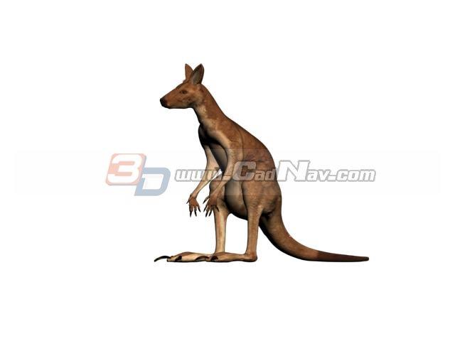 Australian Kangaroo 3d rendering
