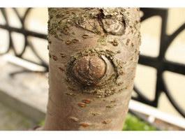 Tree Burl texture
