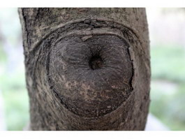 Treetumor nodules texture