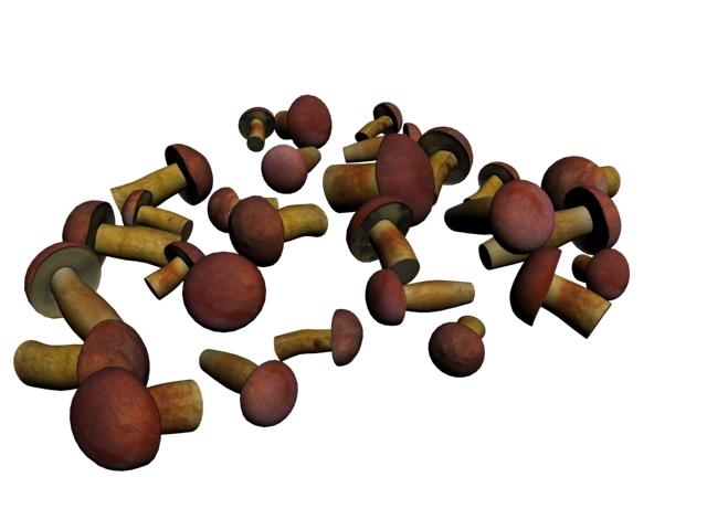 Edible Boletus Mushroom 3d rendering