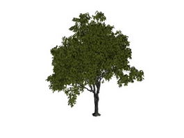 French elm tree 3d model preview