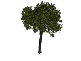 Slippery elm tree 3d model preview