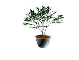 Bonsai tree 3d model preview
