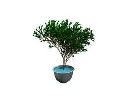 Ornamental plant bonsai 3d model preview