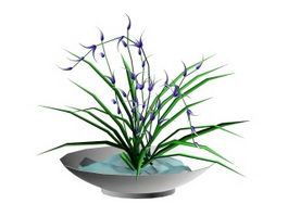 Potted orchids 3d model preview