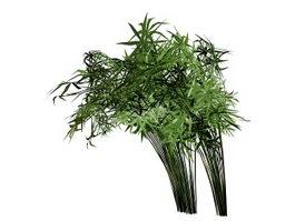 Cyperus papyrus 3d preview