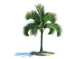 Carpoxylon macrospermum tree 3d model preview