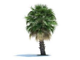 Washingtonia filifera wendland 3d model preview