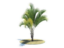 Dypsis decaryi tree 3d model preview