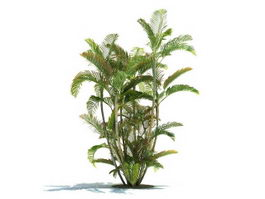 Dypsis lutescens tree 3d model preview