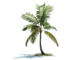 Coconut palm 3d preview