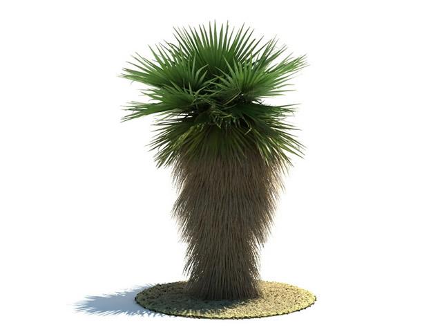 Washingtonia robusta tree 3d rendering