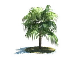 Zombia antillarum tree 3d model preview