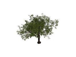 Big apple tree 3d model preview