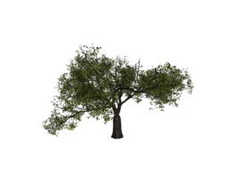 Black cherry tree 3d model preview