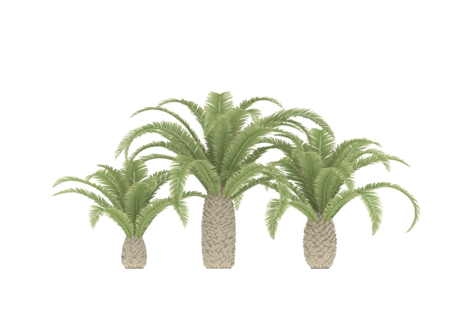 Texas phoenix palm 3d rendering