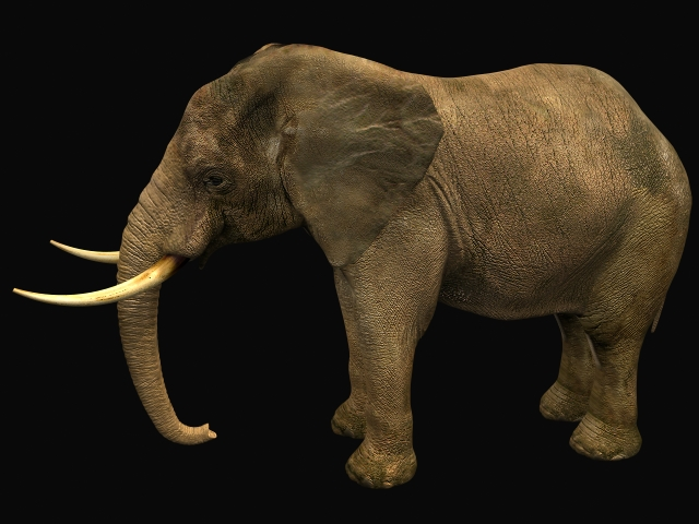 African male elephant 3d rendering