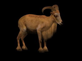 Barbary sheep 3d model preview