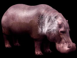 Hippopotamus (river horse) 3d preview
