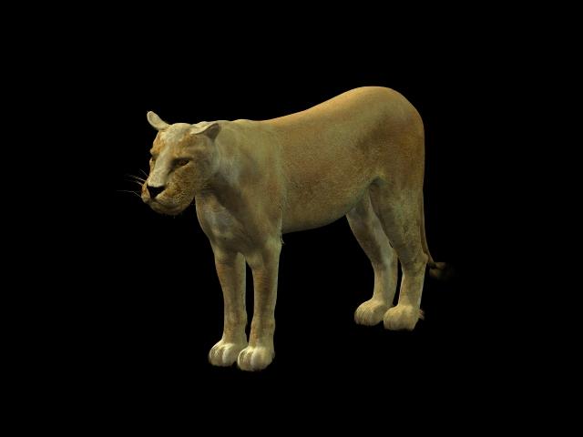 African lioness 3d rendering