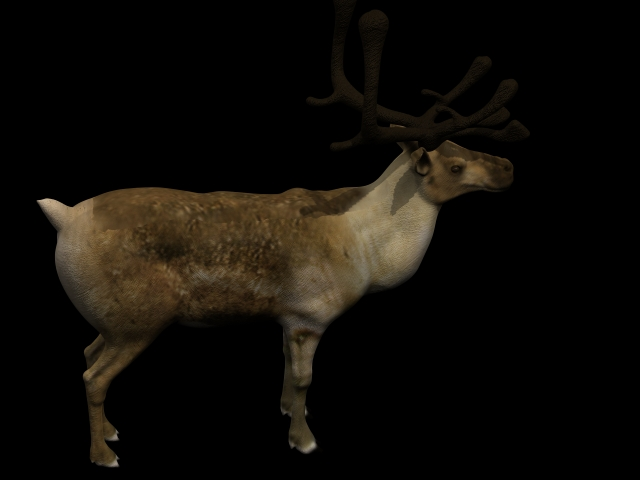 Reindeer 3d rendering