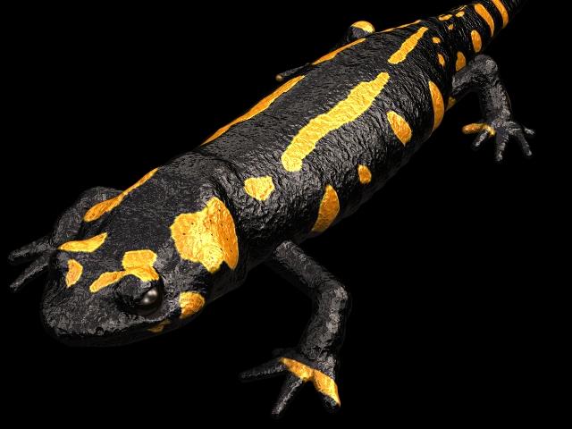 Salamander 3d rendering