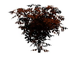 Wild cherry tree 3d model preview