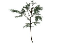 Acacia thorntree 3d model preview