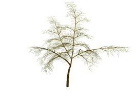 Persian Silk Tree 3d model preview
