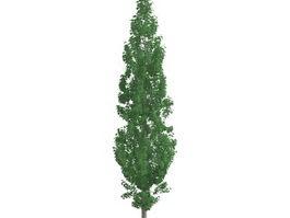 Populus tremula tree 3d model preview