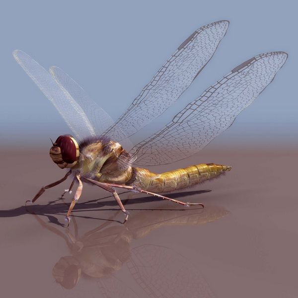 Anaciaeschna jaspidea dragonfly 3d rendering