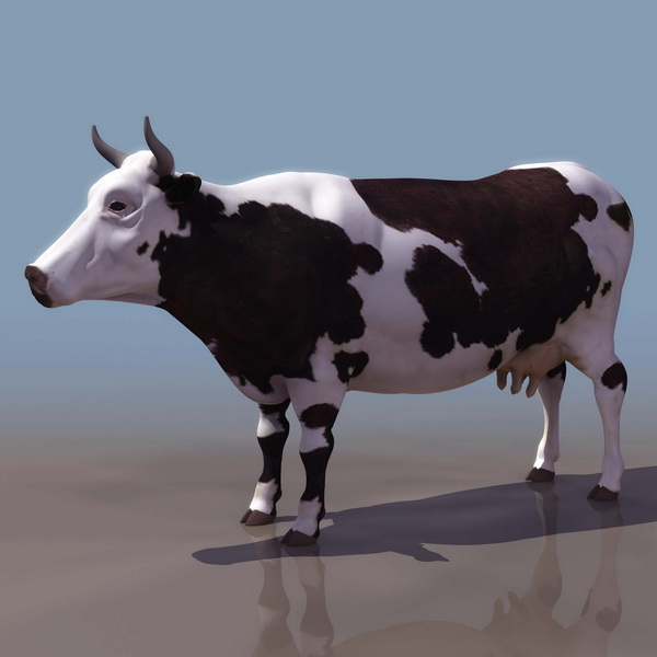 Dairy cattle 3d rendering
