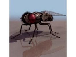Flesh fly 3d model preview