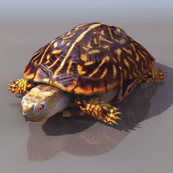 Painted Turtle 3d Model 3ds Files Free Download