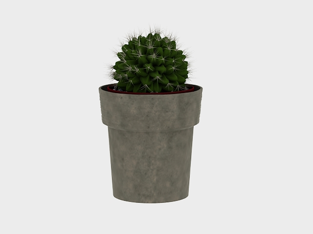 Potted ball cactus 3d rendering