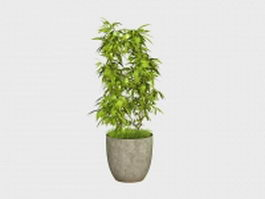 Potted ficus tree 3d model preview