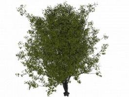 Deciduous tree 3d model preview
