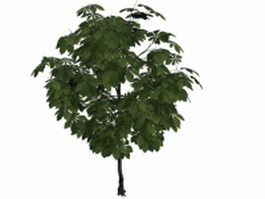 American chestnut tree 3d model preview